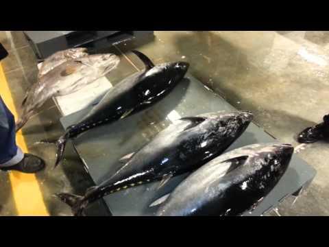 Gürpınar - Beylikdüzü Balık Hali