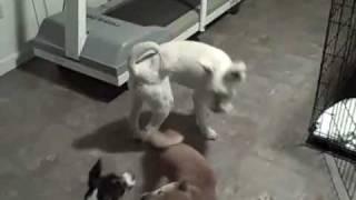 Dfw Dog Training | Redeeming Dogs | Dog Socialization  | Tod Mcvicker - Dog Trainer