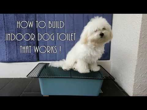 Indoor Dog Toilet That Works - YouTube