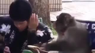 virüsün ilacını bulan maymun kürtçe dublaj