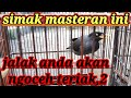 Masteran Ampuh Jalak Kebo Mata Putih Juara  Mp3 - Mp4 Download