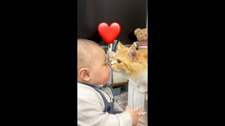 【First Contact】A cat trying to kiss a baby #Shorts