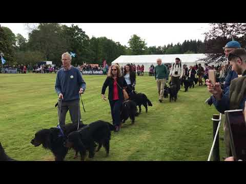 Gordon Setter Gathering at Gordon Castle 2019