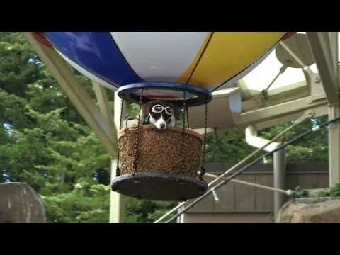 Dog in a Hot Air Balloon!