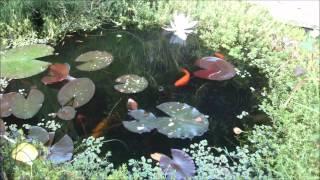My Goldfish Pond