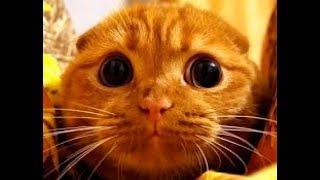 Смешные приколы с котами - веселые короткие подборки