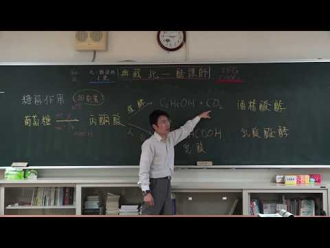 【潘彥宏老師】基礎生物(上) 11 | 第二章植物的構造與功能  第一節植物的營養構造與功能