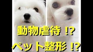 【画像あり】韓国ではペットも整形するらしいぞwww 韓国人「犬は奴隷...