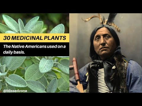 30 medicinal plants the Native Americans used on a daily basis
