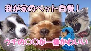 【最強のゴミ犬登場】我が家のペット自慢!ウチの○○が一番カワイイ!!