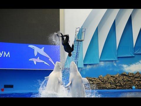 VLOG: Oceanarium Vladivostok world 1K(Океанариум Владивосток)  블라디보스토크 해양 수족관