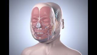 Cleveland Clinic's First Total Face Transplant | Katie Stubblefield | Step by Step