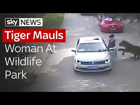 Tiger Mauls Woman To Death At Beijing Park