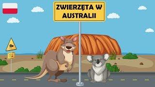 Nauka zwierząt dla dzieci - Zwierzęta w Australii - Zwierzęta dla dzieci po polsku