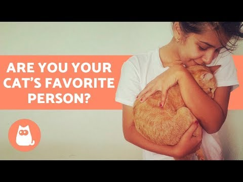 Are You Your Cat's Favorite Person? Discover!