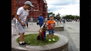 Тайский риджбек Тая на Красной площади  FIFA 2018