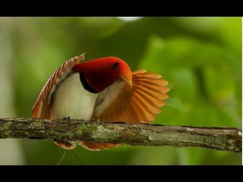 Most Exotic Bird Species - Wildlife Rainforest   Beautiful Birds & Colorful Birds