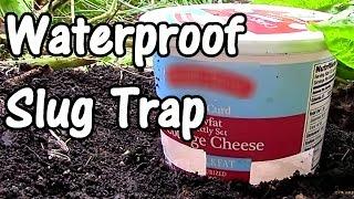 2 Min. Tip: How To Make A Cheap Waterproof Slug Trap  Diy Slug Trap