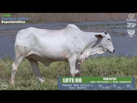 LOTE 08 - Leilão Genética Aditiva ExpoGenética 2019