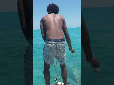 Badu Island Dollar Reef (Dugong)