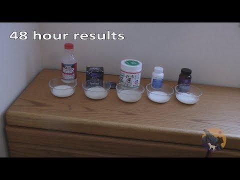 Finding the Best Probiotic with milk test Floratrex, BlueBiotics, Dr. Mercola, Nexabiotic