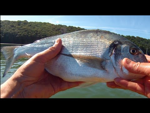 Kayak Fishing - Fishing for Gilthead Bream
