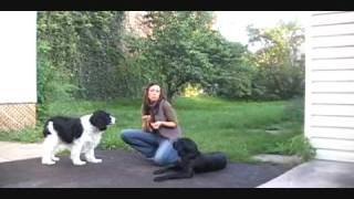 Free Dog Training Video- How To Teaching Leave It
