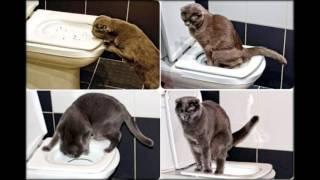 кошки какают в лоток