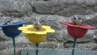 Wildlife World blomst til fuglefoder - blå video