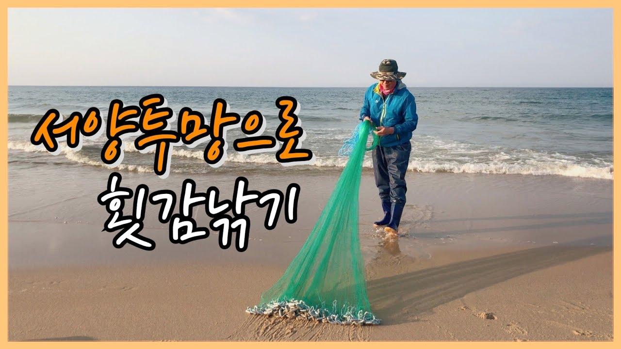 서양투망(홀치기투망)으로 횟감잡기! 전어_농어_숭어_골라잡아! cast net
