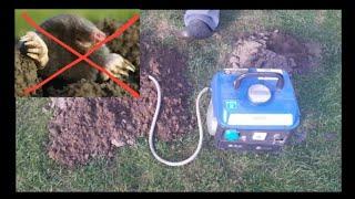 Jak Pozbyć Się Kreta Agregatem Prądotwórczym 230v  The Secret To Successful Mole Eliminate