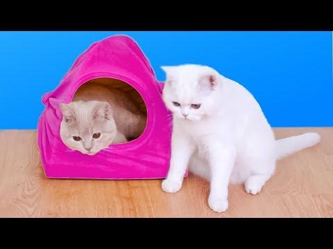 8 Ideas Increíbles Para Dueños De Gatos