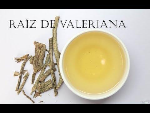 Como preparar té de raíz de valeriana y algunos beneficios de tomar esta infusión para la salud
