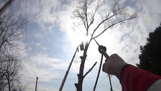 Спил деревьев Симферополь(, 2016-03-28T17:40:56.000Z)