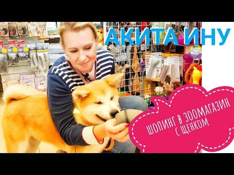 Шопинг. В зоомагазин с щенком Акита Ину. Покупки для собаки.