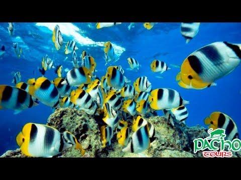 Анталия Аквариум. Antalya Aquarium. Pacho Tour