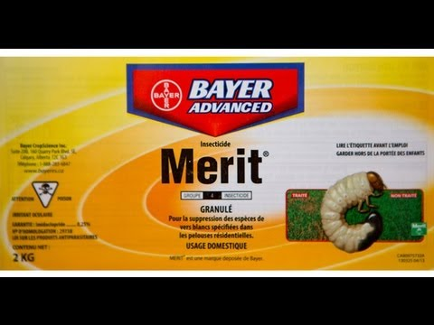 Preventing white worms or grub worms using merit by bayer for Centre de jardin brossard