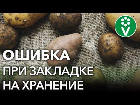 НИКОГДА ТАК НЕ ДЕЛАЙТЕ ПОСЛЕ УБОРКИ КАРТОФЕЛЯ! Ошибки из-за которых картошка быстро портится