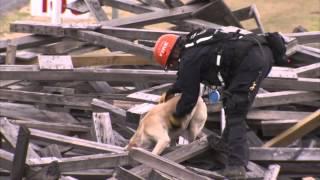 Fema Disaster Canine Workshop At Disaster City®
