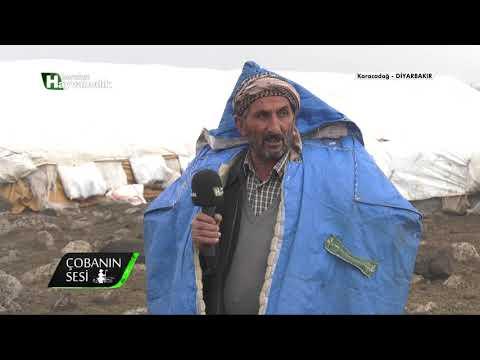 Çobanın Sesi - Göçer Koyunculuk / Karacadağ - Diyarbakır