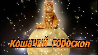 Кошачий гороскоп Часть 1 Интересные факты о кошках  Cat's horoscope