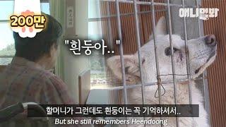 치매로 모든걸 잊은 할머니가 절대 잊지않는 이름.. ㅣ Grandma With Dementia Never Forgets Her Dog