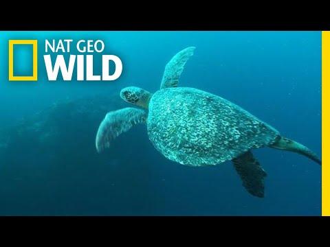 World Turtle Day: A Day Worth Shellabrating  Nat Geo Wild