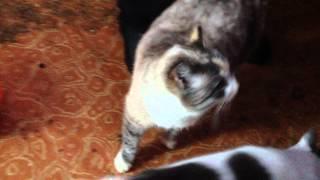 """Кошки приюта """"Добрые руки"""" Томск (Новомихайловка)"""