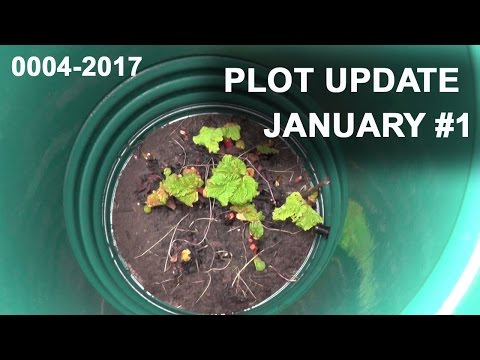 PLOT UPDATE JANUARY #1 - 0004-2017 | Plot To Plates | Allotment Gardening