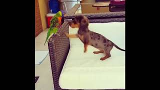funny animals compilations how cute are they