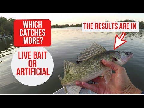 Live Bait Vs. Artificial Bait.  Which Catches More?