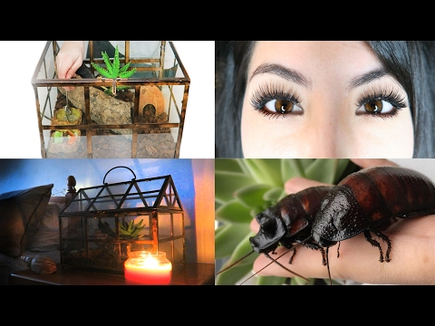 How To Set Up A Cockroach Tank | My Cockroach Enclosure