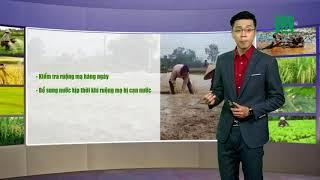 VTC14   Thời tiết nông vụ 30/01/2018   Nông nghiệp miền Bắc bị ảnh hưởng nghiêm trọng