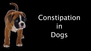Constipation in dogs by  Dr Prashant